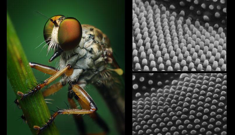 Natural nanomaterial